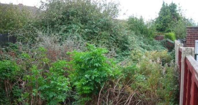 Garden clearance Worcester uk
