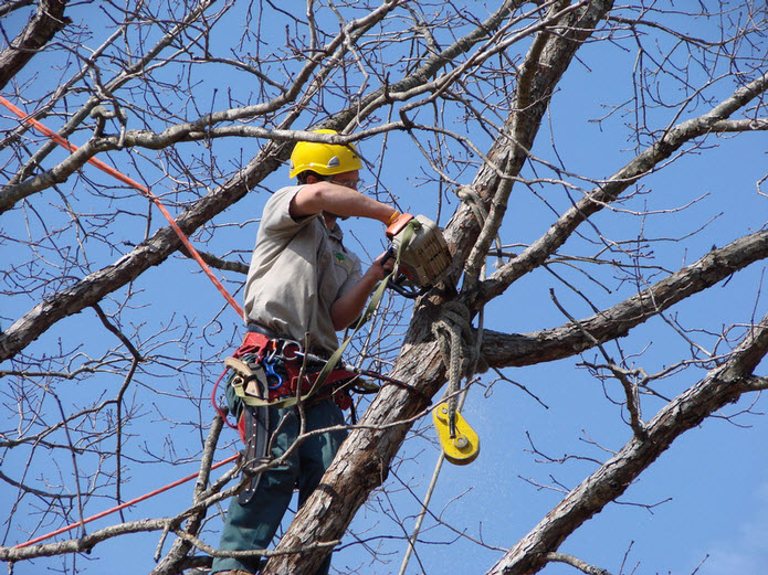 Tree Pruning and Tree Clearing Worcester